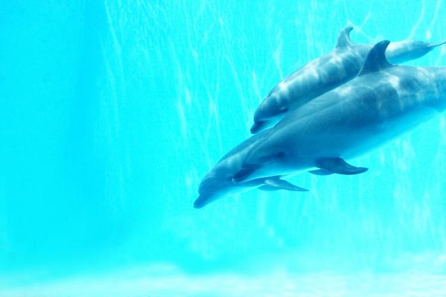 【自閉症児】学校行事の下見で名古屋港水族館へ!下見のポイント、メリットは?|Ribbonの育児ブログ