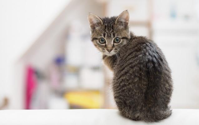 子猫の大きさは、パパの〇〇〇〇と同じ大きさ!!女の子の発言に、みんなびっくり!!