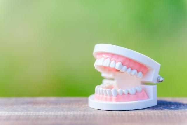歯の矯正は本人の努力も必要!?小2で受け口(反対咬合)の矯正開始。2年経った現在は。