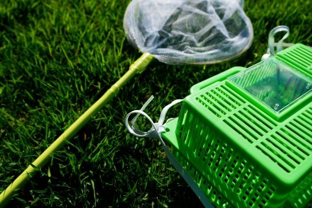 虫に興味を持ち始めた子どもに。最初に飼うならダンゴムシがおすすめ!