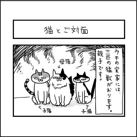 猫|ぽこたろー育児漫画